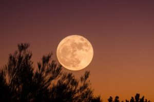 Luna in zodii